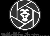 Konkurs fotograficzny ANIMAL BEHAVIOUR – do 31 grudnia 2018