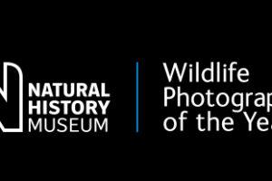 Konkurs fotograficzny Wildlife Photographer of the Year 2019 – do 13 grudnia 2018