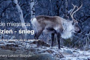 Konkurs fotograficzny Śnieg organizator Olympus