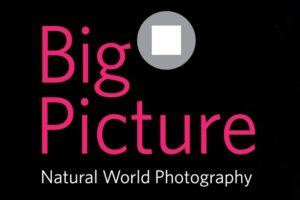 Konkurs fotograficzny BigPicture Natural World Photography – do 1 marca 2019