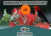 Konkurs fotograficzny PRZYRODA