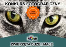 """Konkurs fotograficzny """"ZWIERZĘTA DUŻE I MAŁE"""" – do 14 lipca 2019"""